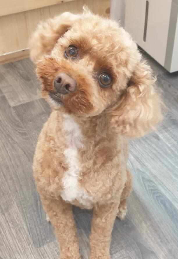 Bark & Bath Dog Grooming Curly Coat Dog