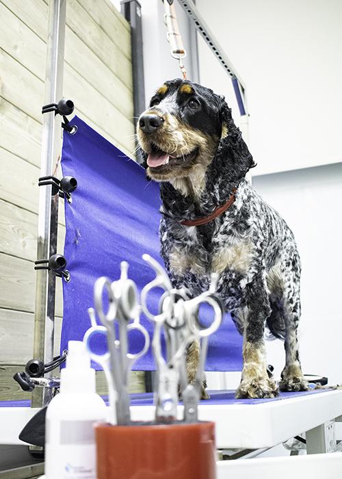 Bark & Bath Dog Grooming Glasgow Puppy grooming