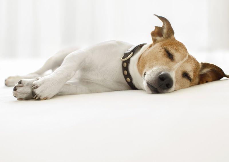 Clinical Canine Massage - Bark & Bath Dog Grooming Glasgow